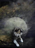 Lunar wolf Stock Images