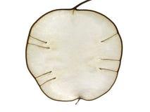 Lunaria como manzana Imagen de archivo libre de regalías