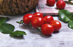 Lunch basket of cherry tomatoes on a branch Stock Image