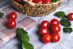 Lunch basket of cherry tomatoes on a branch Royalty Free Stock Photo