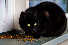 Lunch for Strays. A stray eating it`s food Royalty Free Stock Photos