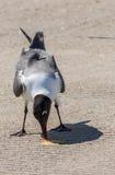 Lunch z Seabird Zdjęcia Royalty Free