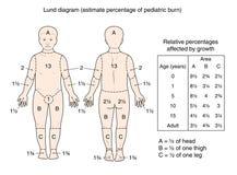 Lund-Diagramm Lizenzfreie Stockbilder