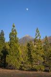 Lune au-dessus de support Teide Photographie stock libre de droits