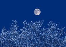 Lune au-dessus des arbres Photographie stock libre de droits