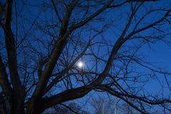 Lune de nuit et les branches des arbres Photographie stock libre de droits
