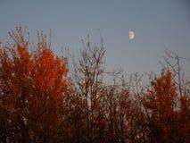 Lune de récolte Photographie stock