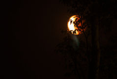 Lune en tétrade de sang de pâque derrière dans l'ombre des arbres Photographie stock