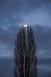 Lune entre les arbres images libres de droits