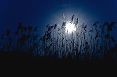 Lune lumineuse pendant la nuit Images stock
