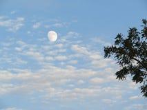 Lune, nuages et arbre image libre de droits