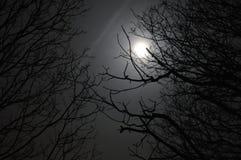 Lune par des arbres Photo stock