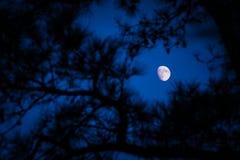 Lune par les arbres Images libres de droits
