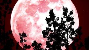 Lune rouge dans les bois banque de vidéos