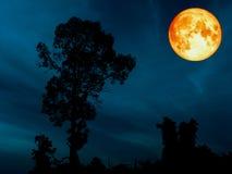lune superbe de sang bleu au-dessus de ciel de cerulean d'arbre de silhouette Image stock