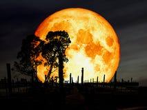 lune superbe de sang bleu au-dessus d'arbre de silhouette de pilier d'abandon Photo stock