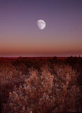 Lune sur l'horizon photographie stock