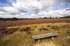 Luneberg Heath landscape Stock Photography