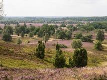 Luneburg荒地,德国 免版税库存照片
