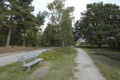 Luneburg荒地-有长凳的远足道路 免版税库存照片