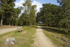 Luneburg荒地-有长凳的远足道路 库存图片