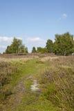 Luneburg荒地-欧石南丛生的荒野 免版税库存图片