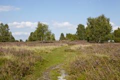 Luneburg荒地-欧石南丛生的荒野 图库摄影