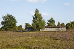 Luneburg荒地-欧石南丛生的荒野 免版税图库摄影