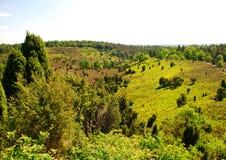 Luneburg荒地 库存照片