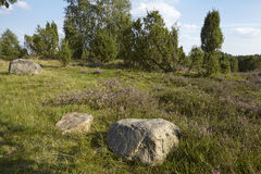 Luneburg Heath - Heathland with stone rock Royalty Free Stock Images