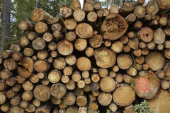 Luneburg Heath - Pile of tree trunks Stock Image