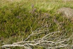 Luneburg Heath - Rotten brunches and heath near Egestorf Stock Photography