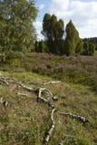 Luneburg Heath - Rotten brunches and heath near Egestorf Royalty Free Stock Photos