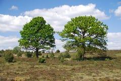 Luneburg hed arkivbild