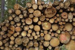 Luneburg hed - hög av trädstammar Fotografering för Bildbyråer
