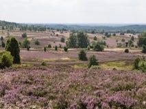 Luneburg-Heide, Deutschland Stockfotos