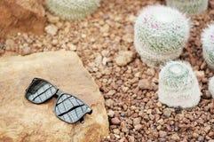 Lunettes de soleil avec le petit cactus Photographie stock libre de droits