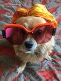 Lunettes de soleil de chien photographie stock libre de droits