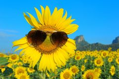Lunettes de soleil de port de Smiley Sunflower Images stock