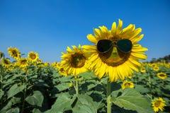 Lunettes de soleil lumineuses de tournesol Photos libres de droits