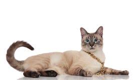 Lunettes de soleil de port de chat de metis de monsieur se trouvant du côté images libres de droits