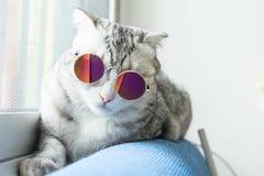 Lunettes de soleil de port de chat mignon à la maison Images libres de droits