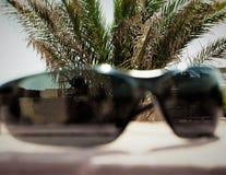 Lunettes de soleil sur un fond des branches des palmiers dattiers et du ciel bleu Image stock