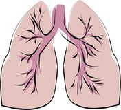 Lung Stock Photos