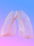 Lung. 3d rendered anatomy illustration of human lung with bronchi Stock Photography