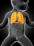 The lung of a baby Royalty Free Stock Images