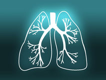 Lung Biology Organ Medicine Study-turkoois Royalty-vrije Stock Foto