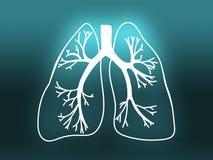Lung Biology Organ Medicine Study turkos Royaltyfri Foto