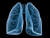 Lung and bronchi stock illustration