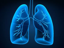 Lung and Bronchi. 3d render Royalty Free Stock Image